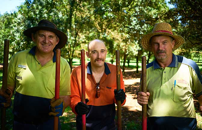 Three farm workers stand with tools in an avocado orchard