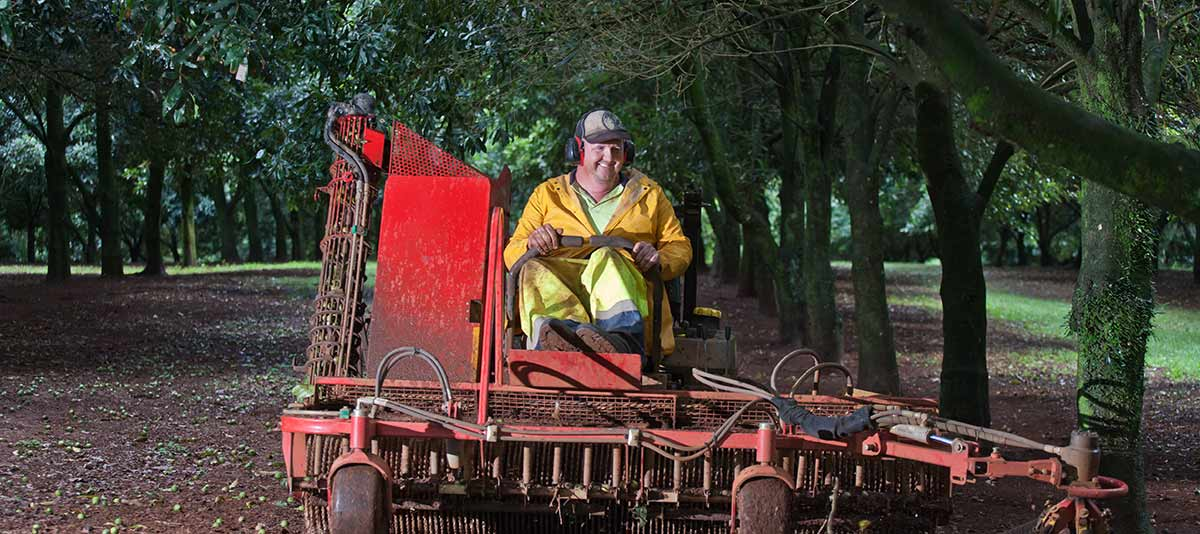 A smiling farm worker drives a macadamia nut harvesting machine