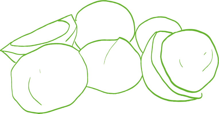An illustration of macadamias in the shell